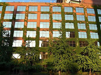 immeuble rouge et vert.jpg