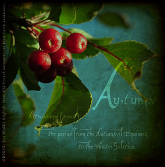 a u t u m n (anniedaisybaby) Tags: autumn tree fall texture nature season berries grunge harvest crab fruittree crabapple palabra allyouneedislove bsquare artistiques completeherbal trsors anawesomeshot novavita dictionaryofimage atqueartificia thelightpainterssociety masterpiecesonblack