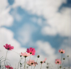 Sky high (otarako☺︎) Tags: 6x6 flexaret