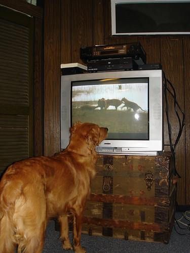 remote hog