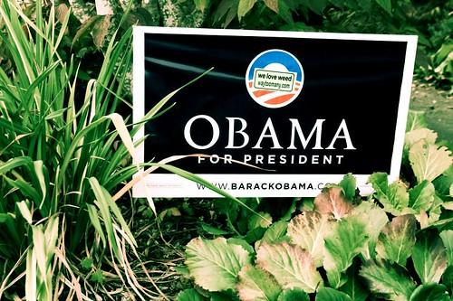 Cronic Obama Supporter