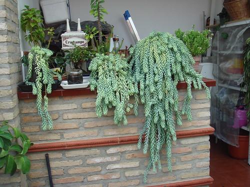 Mis plantas y sus flores 2954874229_551353693c