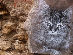 C215 - Paris (C215) Tags: street streetart paris art cat french graffiti stencil christian rue pochoir 75019 masacara tlgraphe szablon c215 pelleport schablon gumy piantillas