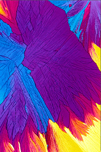 Original - from FSU microscopy website