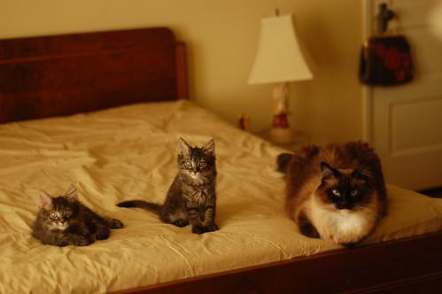Davy, Albert and Charlene