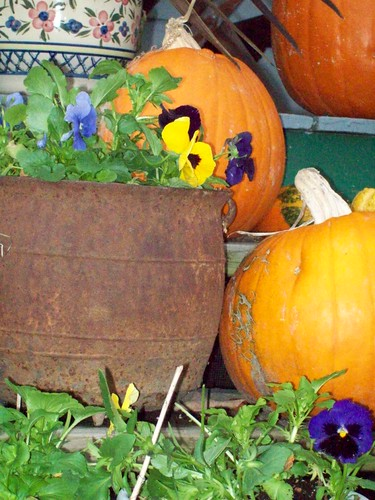 potted pansies and pumpkins