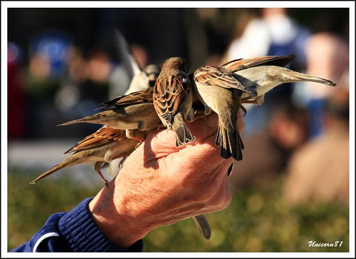 Spatzen / Many sparrows in the hand / Beaucoup de moineaux dans la main / Paris