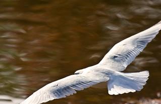 Gull Wing_0553.jpg