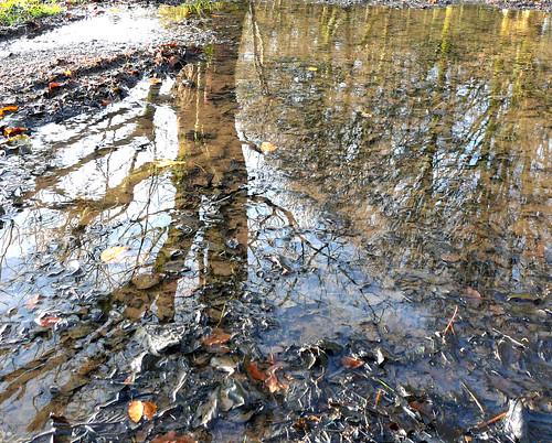 Reflection 23Nov08