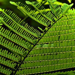 Details of a fern (Bn) Tags: fern rainforest ferns laos vangvieng vividgreen varen greenismycolor greenfernleaf firstlandplants naturesfinestferns gettingintodetails detailsofafern 1012000species existedfor350millionsyears notfoundonantarctica specifichabitat