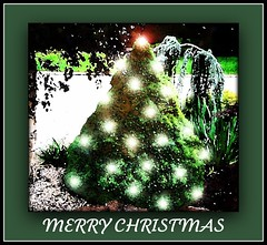 HAVE A TWINKALICIOUS CHRISTMAS (craftedfromtheheart) Tags: christmas mountain tree nature forest photoshop garden lights australia melbourne twinkle victoria flickrfamily explore merrychristmas mtdandenong visualart conifer tistheseason otw beautysecret tistheseasontobejolly merrychristmasandahappynewyear explored elements4 abigfave flickrenvy sparklingheart theunforgettablepictures theunforgettablepicturegroup digitaleloquence thebeautyoftrees ddsnet digitalartfx seasonsmagic theenvyofphotoshopandphotoart twinkalicious mastgullygardens craftedfromtheeheart