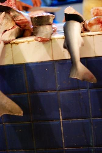 Fish13.jpg