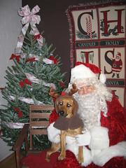 The Dog Shop Santa Photos 018 (WashHumane) Tags: santa dog shop photos whs the 12608