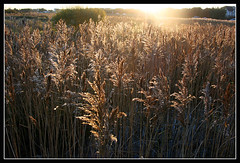 Oranmore wild grass