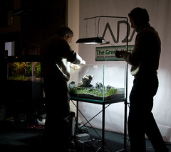 TGM ADA Demo - Planting (Stu Worrall Photography) Tags: green ada tank stu machine demonstration meet planted aquascaping tgm stuworrall ukaps ukapsorg worralltgmthegreenmachineadademonstrationplantedta