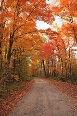 Let's hold our hands together and walk the path to Autumn (YYZDez) Tags: trees ontario fall leaves forest landscape woods autum path walk fallcolors hike trail 5d canon5d haliburton bancroft walkingtrail bestofmywinners coth5 canonef1740f4llens afhht