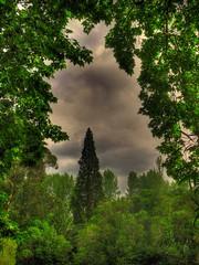 Marco verde con arbore