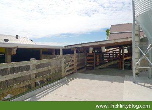 harley-farms-goat-dairy-milking-ramp
