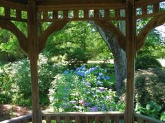 Cylburn Arboretum - gazebo & hydrangeas (karma (Karen)) Tags: flowers trees light spring shadows blossoms maryland baltimore brightcolors hydrangeas gazebos cylburn viewbeyond arboretums