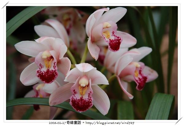 DSC_2580蘭花