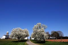 Kerr's Farm, Pennington, NJ (nosha) Tags: trees newjersey spring blossom farm nj kerr pennington nosha kerrsfarm ihaveanewcameraanditsspringpleaseforgivealltheflowershots noshalikes
