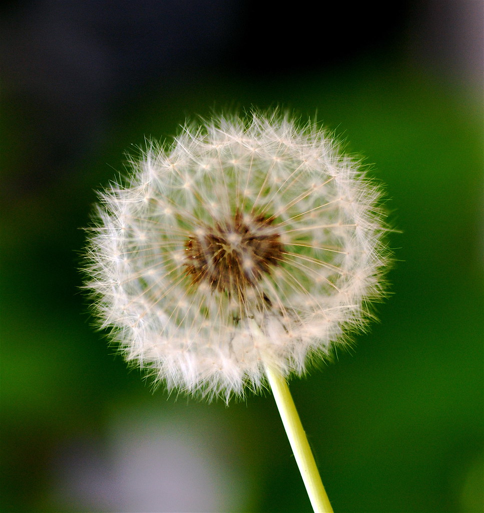 Make a Wish - 110/366