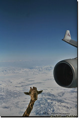 Oops .. Look who is looking at me?? (Q.T.R_B.o.y  M.A.D.R.I.D.I ) Tags: blue sky snow window clouds plane airplane wings looking oops giraffe mountins qatarairways mywinners goldstaraward qtrboy