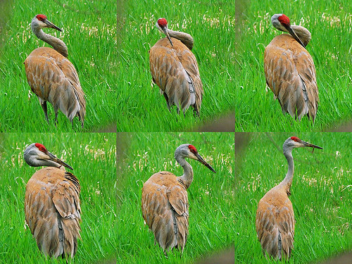 Sandhill Sequence
