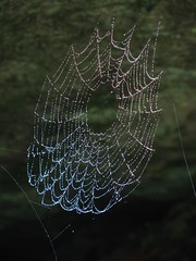 Wet web at cave entrance