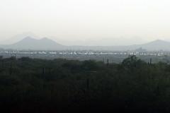 IMG_1073-fixed (quinn.anya) Tags: arizona saguaronationalpark