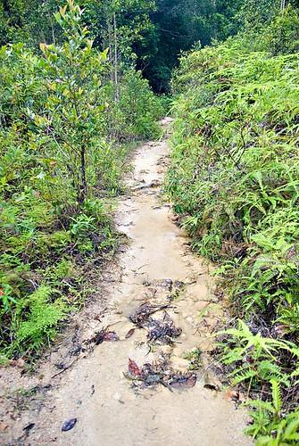 Mud Path