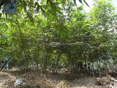 你拍攝的 44竹林裡的人群。