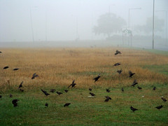 First fog in London & the Heath