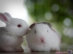0031_2008-09-06 (Resize2) (EdShal) Tags: rabbit mice rabbits f28 2470mm 40d edshal edpets