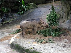 Straight out of the Lion King (Carla Renee) Tags: zoo singapore singaporezoo nightsafari
