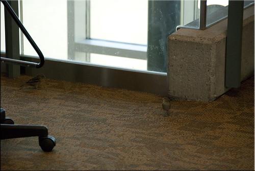 Airport Birds