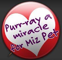 MiracleforMizPet