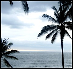 view from a room (tiffa130) Tags: ocean sunset silhouette mexico puerto nikon stock creative free jalisco commons cc pacificocean palmtree creativecommons stockphotos vallarta puertovallarta dslr pv stockphoto flowersplants nikoncamera freepics flickrstock tiffa photobytiffany nikondslr freestock 10millionphotos nikond40x d40x freestockphotos freestockphotography tiffanyday photosbytiffa photobytiffa