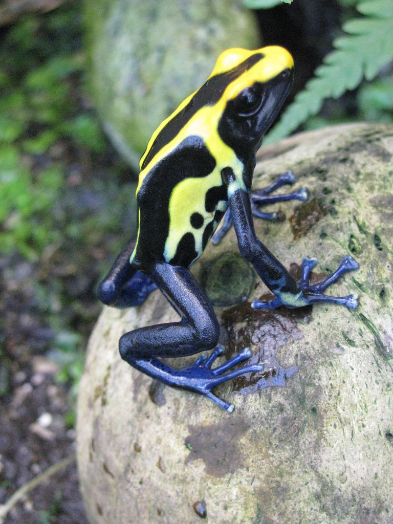 frogs essay What is an amphibian kids learn about these cold blooded animals including salamanders, frogs, and toads lifecycle such as tadpole and metamorphosis.