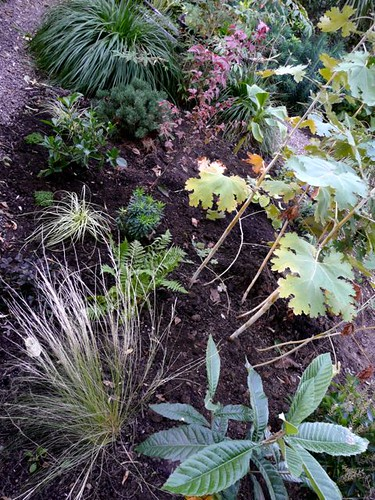 Carex, euphorbia, robust male fern, chocolate lysimachia, gardenia