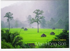 "TH: Private Swap ""Morning Mist in Rice Field"" From thitirat 1983  (-flection-) Tags: morning thailand postcard card ricefield maehongson privateswap thitirat1983 mistinvalleys"