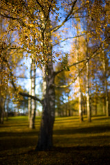 autumn etude (Aleksandr Matveev) Tags: autumn dof bokeh contax 5d cz 3514 distagon naturesfinest supershot grouplife mywinners platinumphoto colorphotoaward colourartaward czcontaxdistagon3514