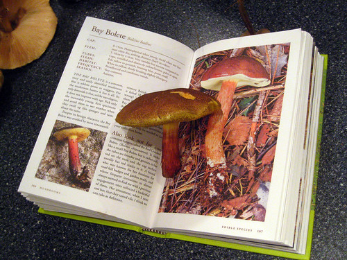 Bay bolete book