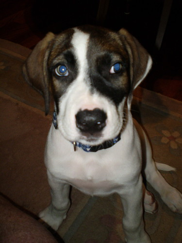 Max(Xavier) 11 weeks