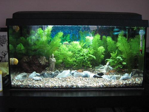 My Fishtank