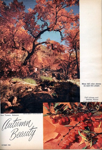 Autumn Beauty 1 - 1953 (by senses working overtime)