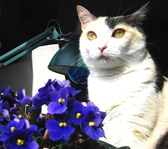LILY (usifu2000) Tags: flowers cat catnipaddicts