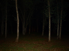 Dark Forest (jhhwild) Tags: night forest dark landscape