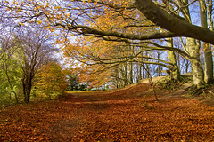 Path on fire (Gary*) Tags: autumn trees england brown sun sunlight fall nature leaves countryside woods solitude peace path branches shade russet sharpenhoe clappers impressedbeauty