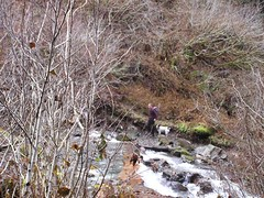Dani and Jasper crossing the Stillaguamish Creek